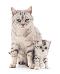 Mom cat with kitten.