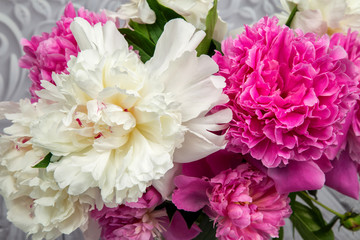 ender pink and white peony flowers close-up