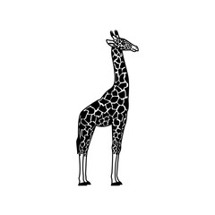 Realistic illustration of a giraffe. Vector object isolated on white background