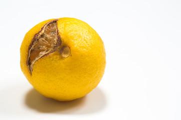 Rotten lemon isolated on white with copy space