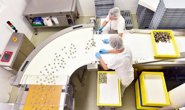 Lebensmittelindustrie: Arbeiter am Fliessband in der Produktion von Pralinen in einer Fabrik // food industry: production of Chocolates in a factory