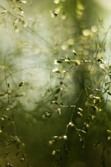 Abstract green grass for background.