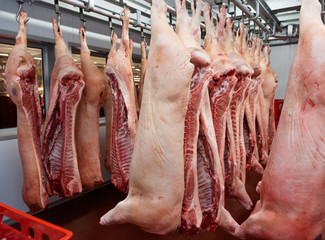 Pig carcasses cut in half in slaughtergouse
