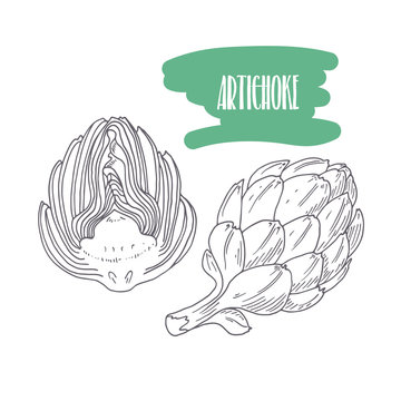 Hand drawn artichoke isolated on white. Sketch style vegetables with slices for market, kitchen or food package design