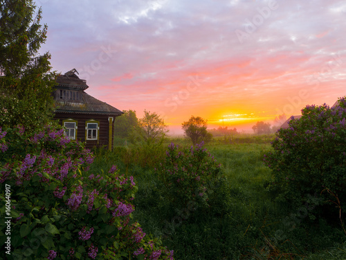 Dawn in the village Savinskoye, Yaroslavl region. Russia. The lilacs and the old house of wood. Russian landscape.