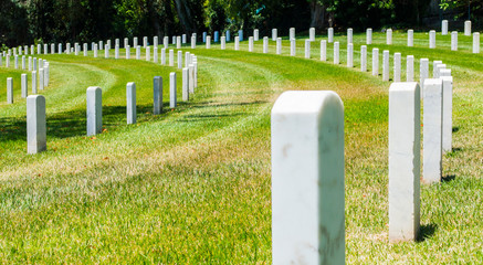 curved rows of gravestones in military cemetery