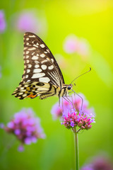 Beautiful Butterfly on Colorful Flower
