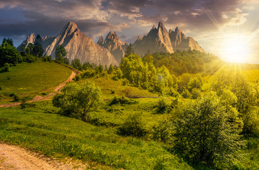 forest on grassy hillside in tatras at sunset