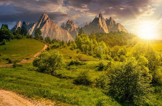 forest on grassy hillside in tatras at sunset