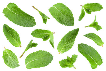 Mint leaf herb closeup collection