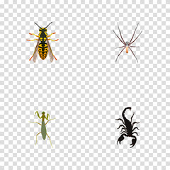 Realistic Bee, Grasshopper, Spider And Other Vector Elements. Set Of Bug Realistic Symbols Also Includes Insect, Mantis, Sting Objects.