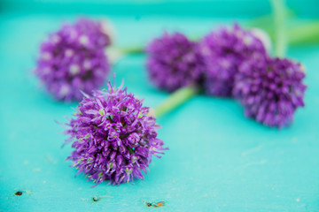 Allium flowers bouquet in a stylish metal decorative vase. Shallow depth of field