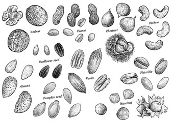 Nuts collection illustration, drawing, engraving, ink, line art, vector