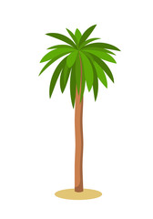 Palm tree. Isolated on white. Vector illustration.