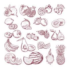 Vector sketch fruits for package design. Doodle illustrations set