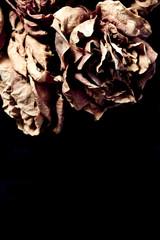 Dead Dried Flowers