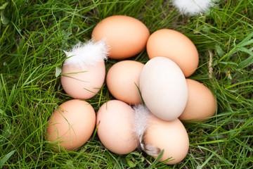 chicken eggs lying in a nest of green grass