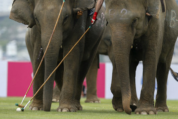 Players take part in an exhibition match during the annual charity King's Cup Elephant Polo Tournament at a riverside resort in Bangkok