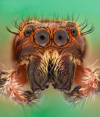 Door stickers Hand drawn Sketch of animals Extreme magnification - Jumping spider portrait