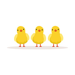 Three cute chickens vector Illustration