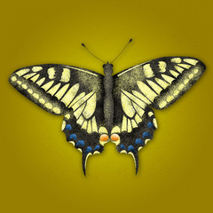 Textured illustration of butterfly