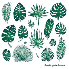 Set of green doodle exotic palm leaves and plants on a white background. Vector botanical illustration, design elements.