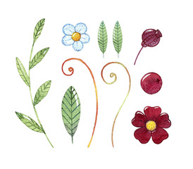 Hand drawn watercolor set fabulous leaves and flowers. Illustration for design of wedding invitations, greeting cards, postcards, children's books.