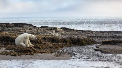 Kvitoya island, Eastern Svalbard, Arctic Ocean, Norway.