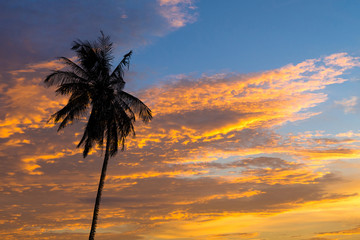 Tropical sunset with Coconut palm trees silhoette at beach