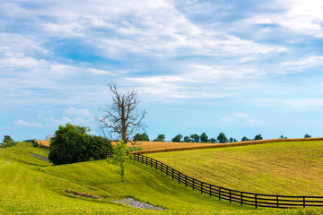 Country landscape.