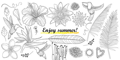 Vector set with outline Hummingbird or Colibri and tropical flowers isolated on white. Strelitzia, hibiscus, plumeria, passiflora and palm leaf in contour for enjoy summer design and coloring page.