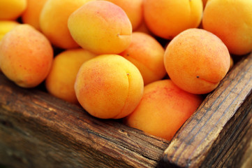 Crate of fresh ripe sweet apricots, selective focus