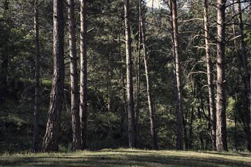 bosque con arboles altos