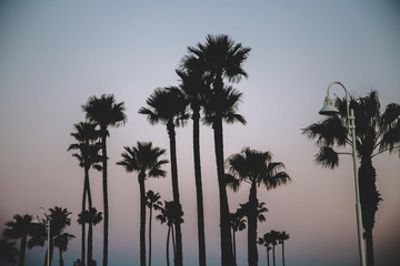 Long Beach California Sunset Palms 04