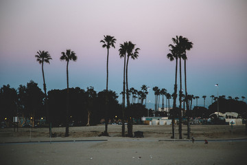 Long Beach California Sunset Palms 03