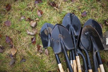 Shovels lying in grass
