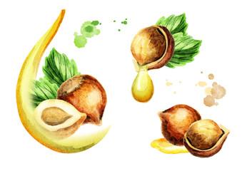 Haznut oil set. Watercolor hand-drawn illustration