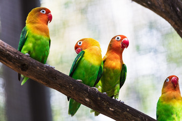 beautiful parrots in a tree