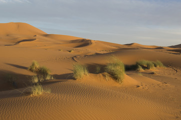 Erchebbi desert in to morocco
