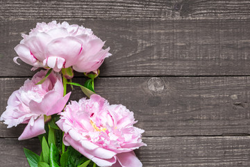 pink peonies flowers on dark wooden background