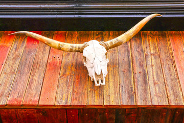 Skull and horns of a Texas Longhorn above an old western antiques store on W. Germain Street in the historic district of downtown St. Cloud Minnesota