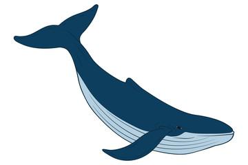 Whale. Vector art.