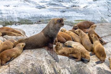 Sea Lions island - Beagle Channel, Ushuaia, Argentina