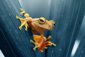 A yellow frog on a leaf.
