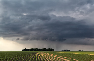 raining cloud over field in farmland
