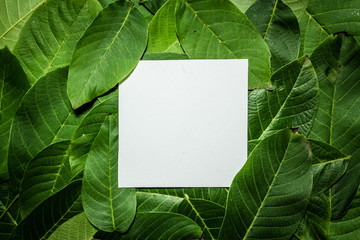 Creative layout made of walnut green leaves. Flat lay. Nature background