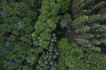forest birdview