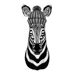 Zebra Horse wearing winter knitted hat
