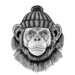 Chimpanzee Monkey wearing winter knitted hat
