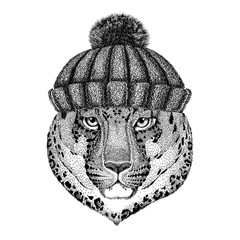 Wild cat Leopard Cat-o'-mountain Panther wearing winter knitted hat